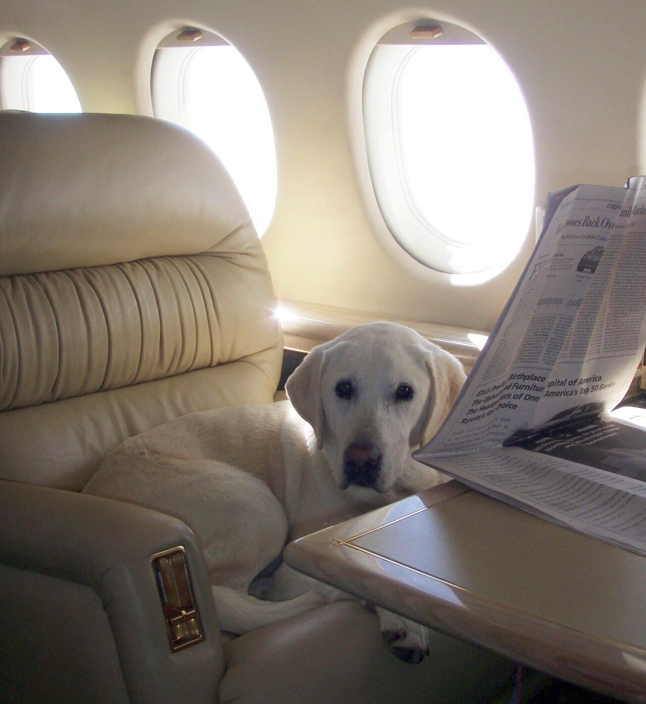 canine-review-maggie-netjet