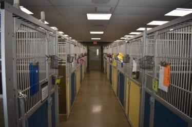 canine-review-animal-welfare-league-arlington03