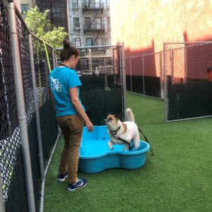 canine-review-nycacc-001