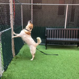 canine-review-nycacc-002-dog-in-exercise-area-asphalt