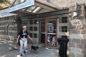 canine-review-nycacc-manhattan-entrance-003
