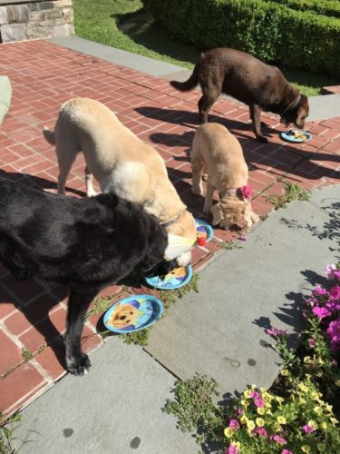 canine-review-nellie-5th-birthday-party-cake-dogs