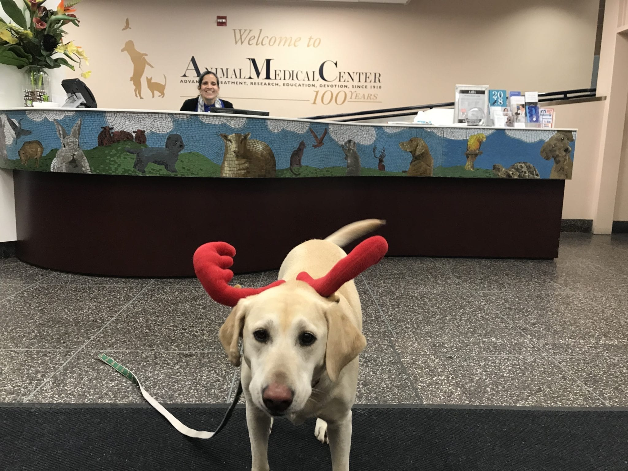 canine-review-nellie-amcny-antlers-lobby