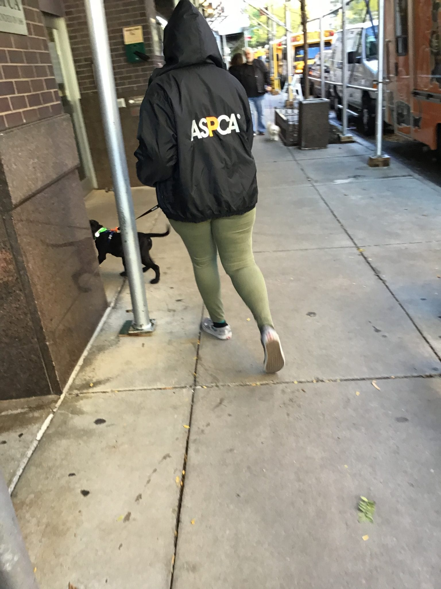 Dog coming back from a walk outside ASPCA Adoption center
