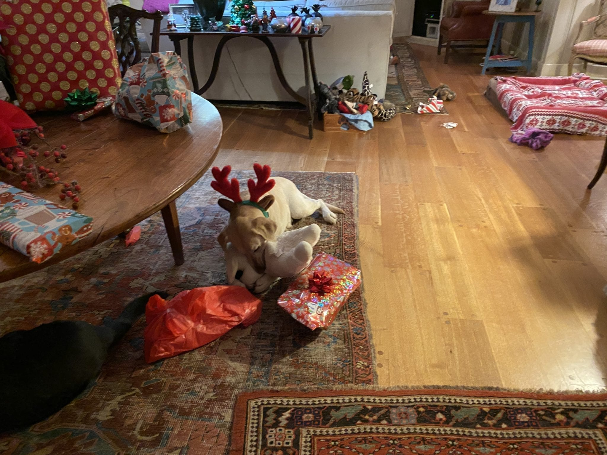 canine-review-nellie-christmas-2019-antlers