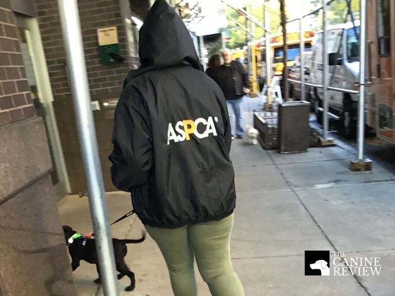 aspca dog returning from walk outside adoption center