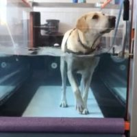 canine-review-nellie-treadmill-amcny