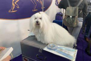 canine_review_una_coton