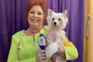 """Owner and handler Kathy with """"Jiggy"""" age 4. """"This is the Jiggy brush!"""" Kathy tells us, holding up Jiggy's personalized, hand-painted brush. Asked about how much time it takes to get Jiggy ready for a show, Kathy says, """"For her, because she's got a lot of body hair, 45 minutes, maybe,"""" she says. """"I bathe her, then I use a blowdryer,"""" Kathy adds."""