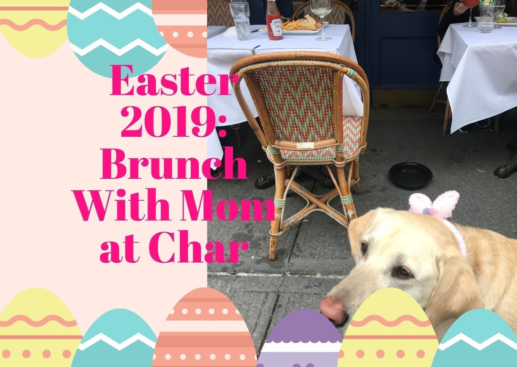 canine-review-easter2019a