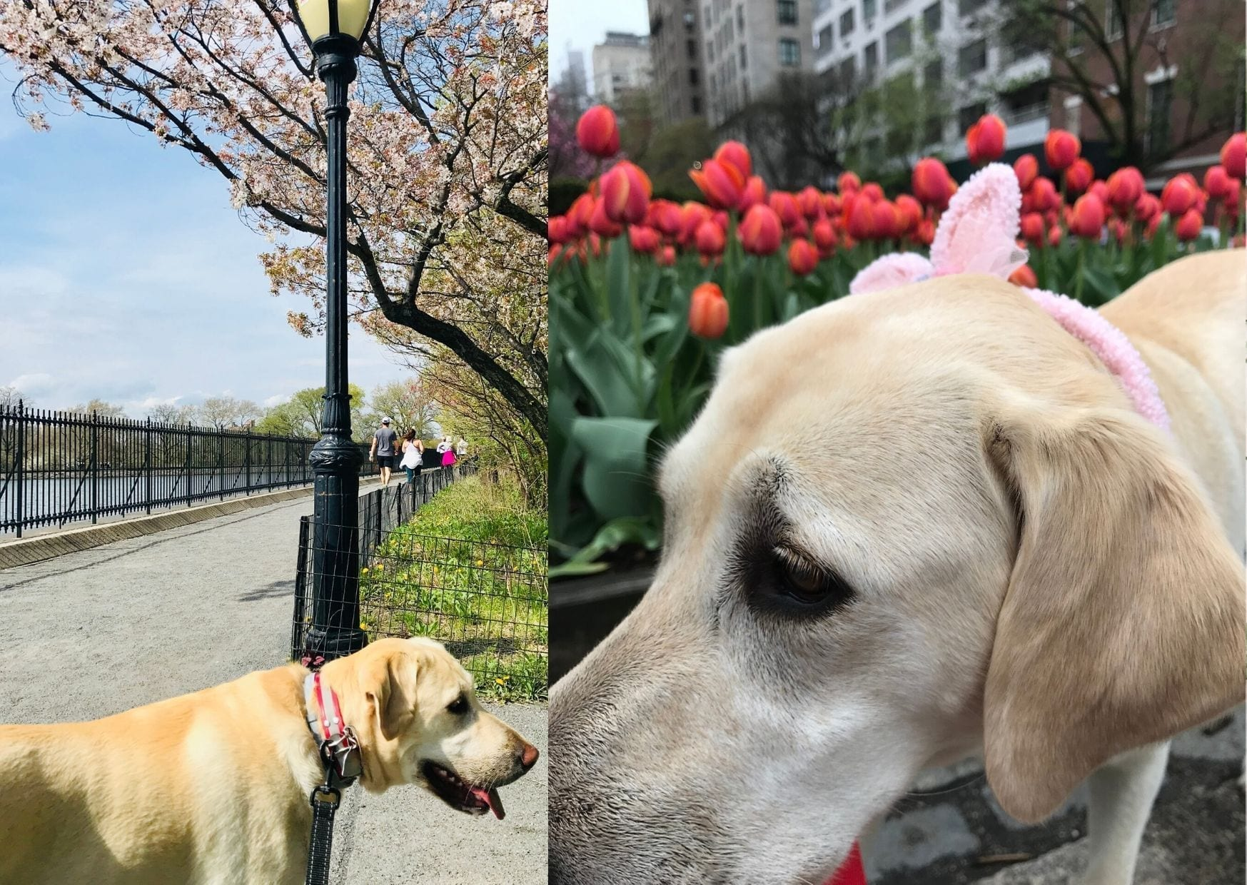 canine-review-easter2019c