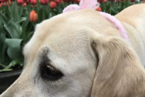 canine-review-nell-park-ave-easter2-2019