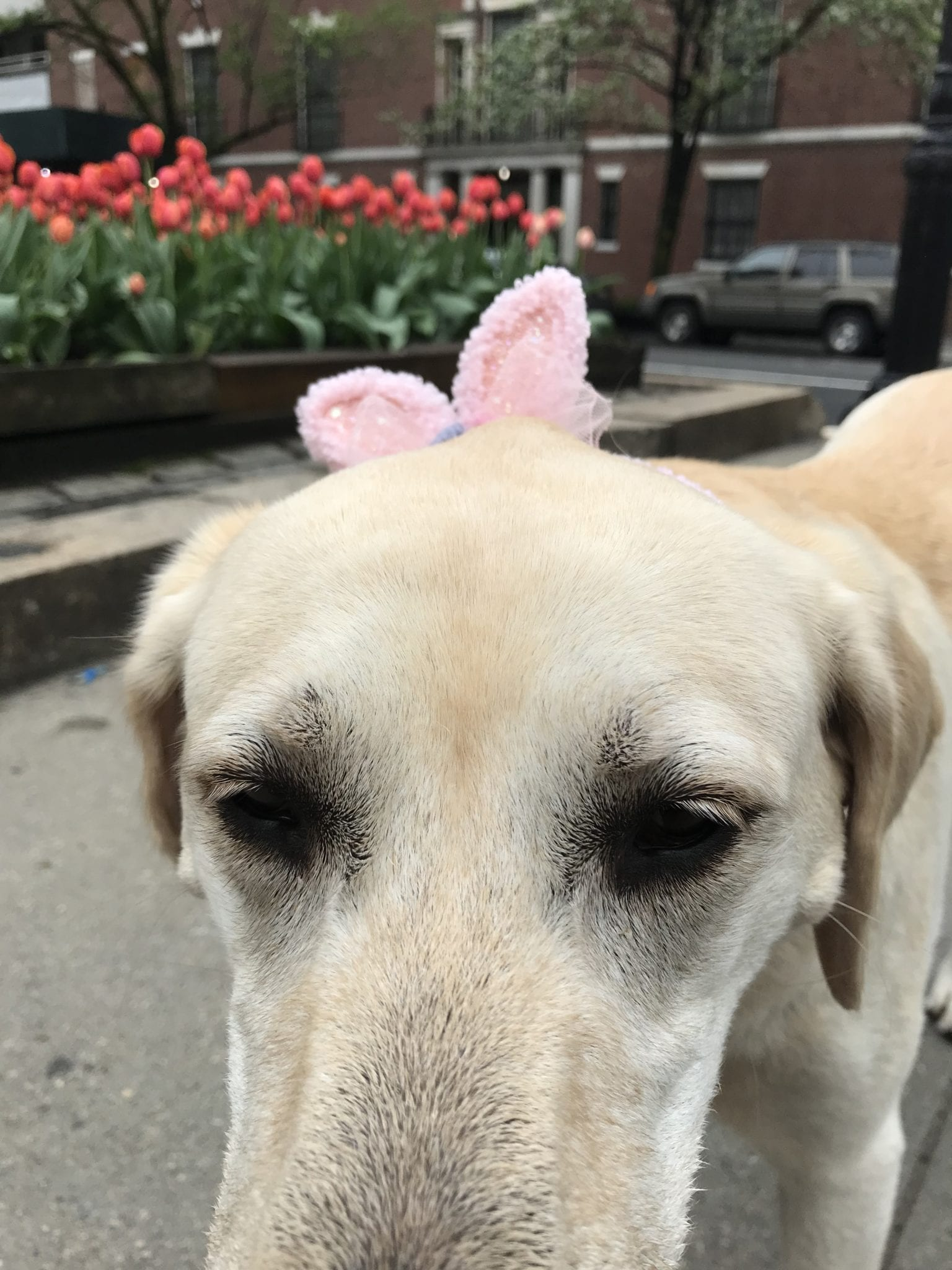 canine-review-nellie-park-ave-easter2019