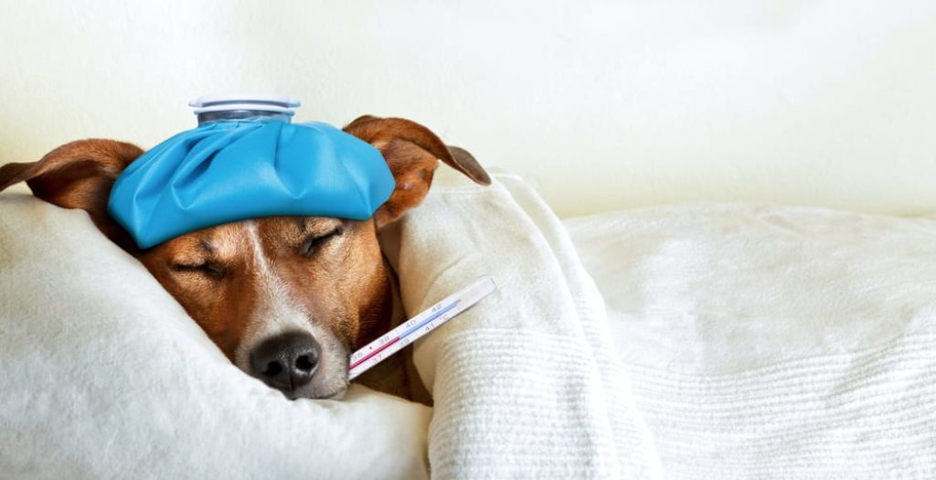 Does Your Pet's Health Insurance Cover SARS-CoV-2?
