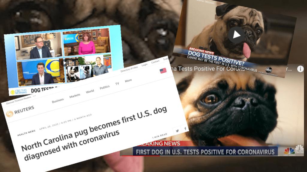 News Media Run False COVID-19 Dog Story, Refuse To Correct It