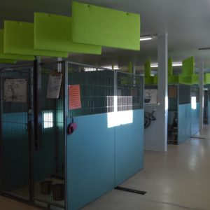 HSWA adoptable kennel, there are 11 dogs currently in these kennels.