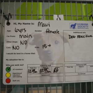HSWA example of name and info on kennels, this one is for maui aged 6