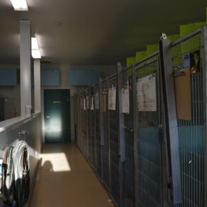 HSWA more of the adoptable kennel, the STAFF ONLY door leads to the stray and isolation kennels, not available to the public (1)