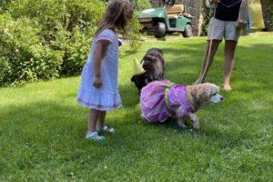dog birthday party july 2020 lulu