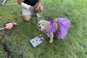 dog birthday party july 2020 lulu cake