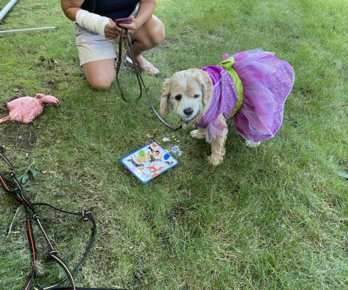 dog birthday party july 2020 lulu cake 2