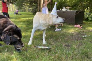 dog birthday party july 2020 nellie cake 2