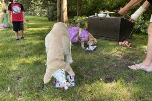 dog birthday party july 2020 nellie cake focus