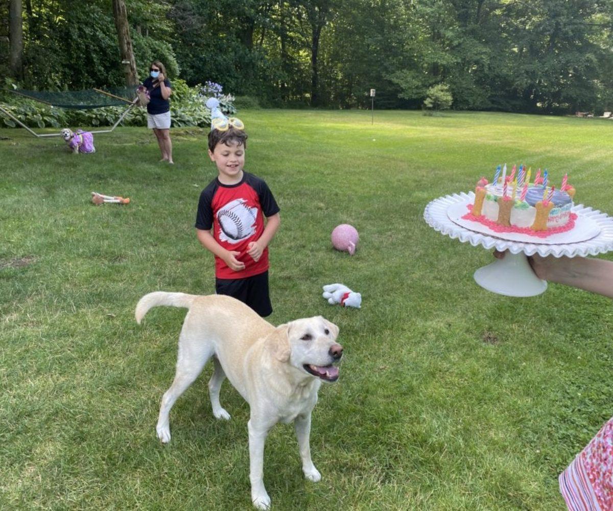 dog birthday party july 2020 nellie cake2