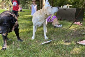 dog birthday party july 2020 rocky is milton