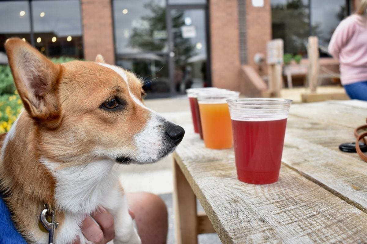 Missy-Charlotte-brewery