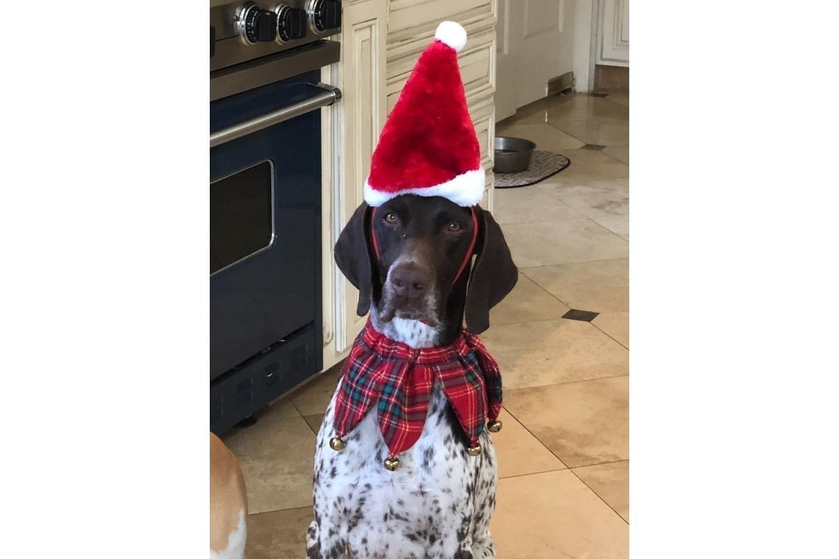 christmas cj