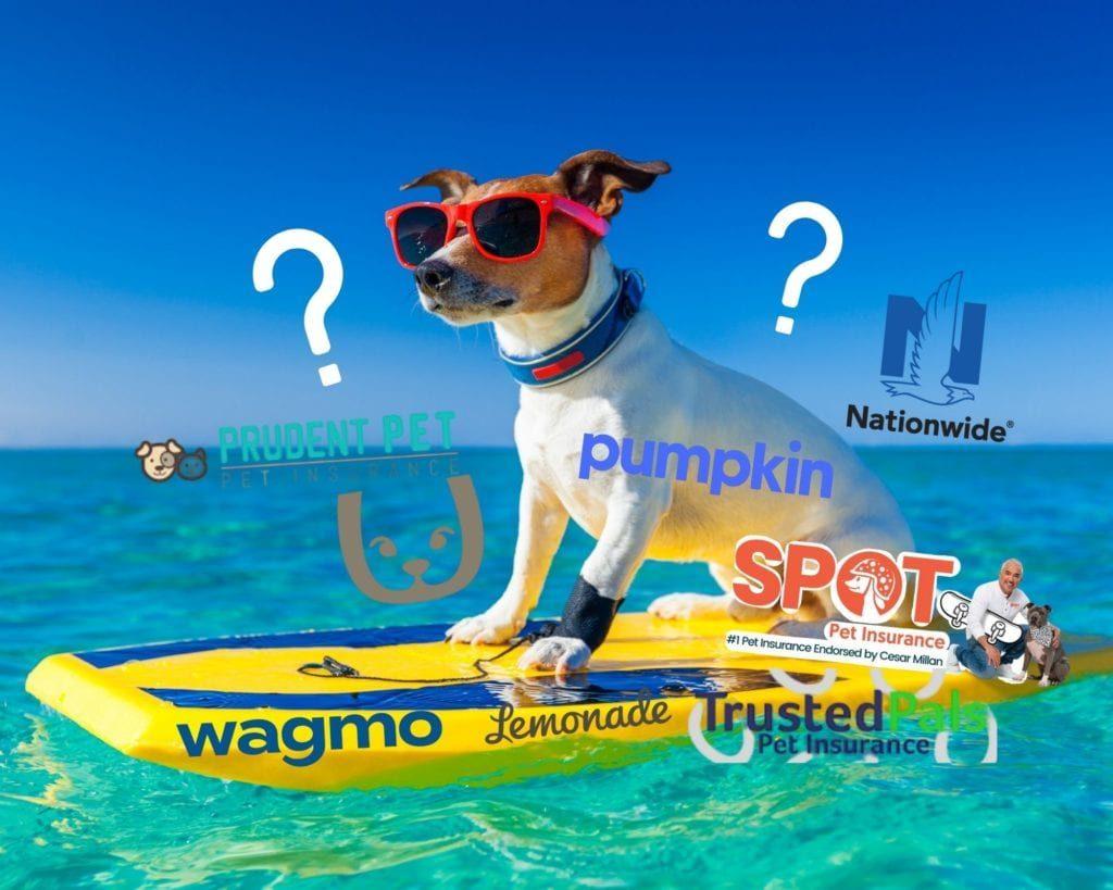 insurance dog boarding