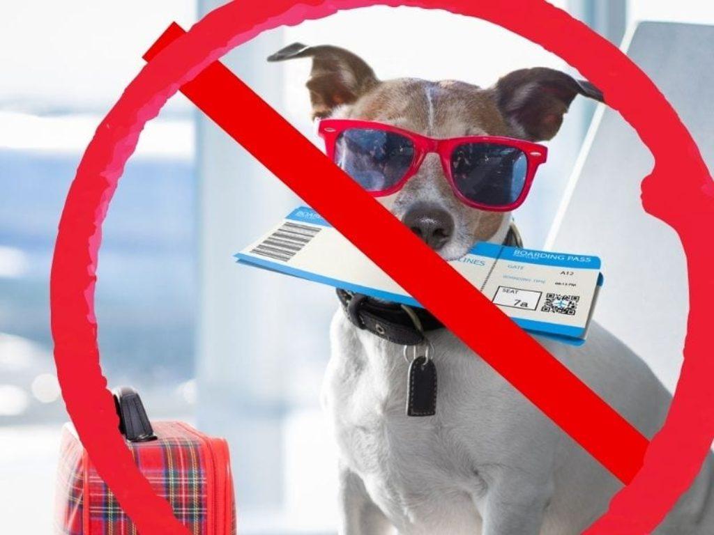 dog banned
