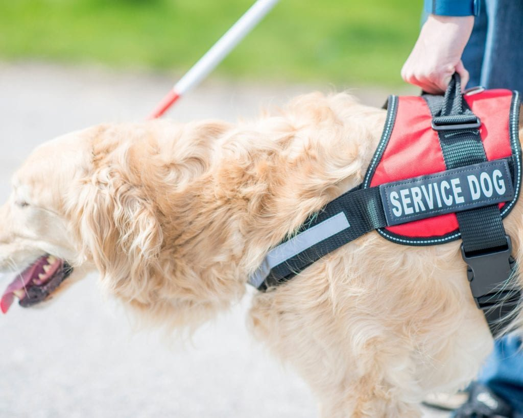 Going forward, airlines will only be required to accommodate service dogs on board.