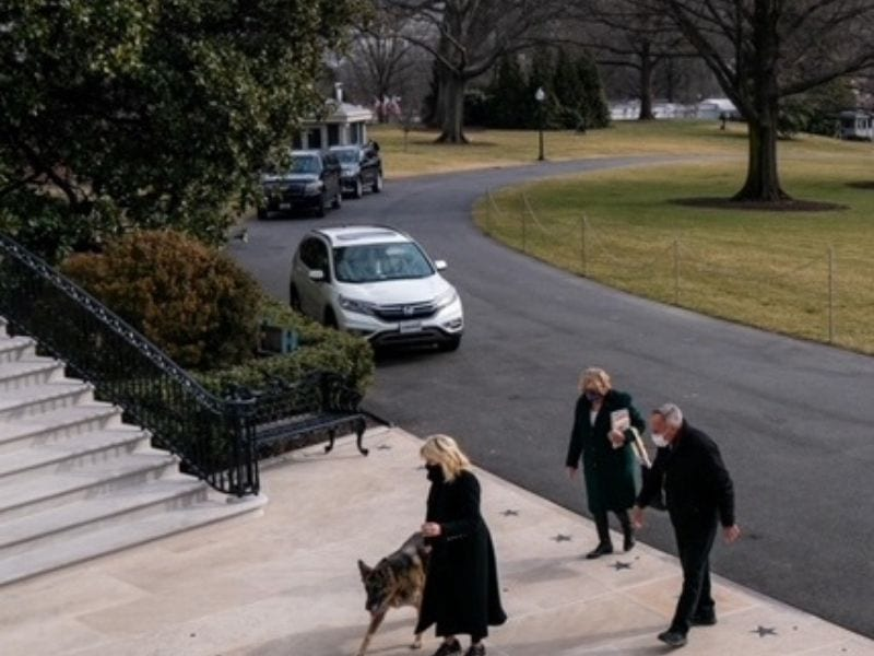 Champ and Major arriving at the White House
