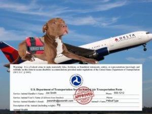 service dog requirements, documentation, airplane, airline, delta