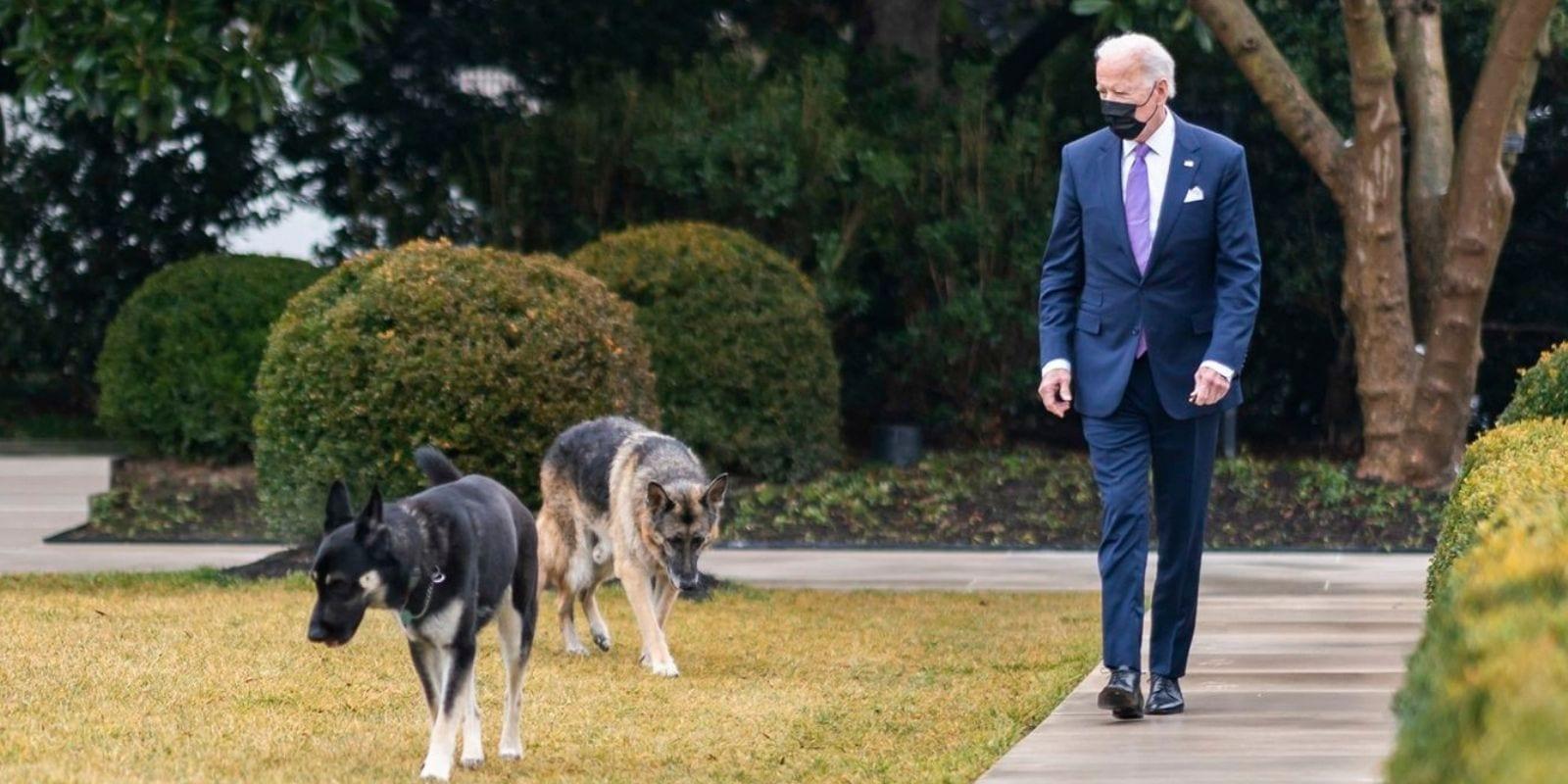 biden dogs back to white house champ major 1