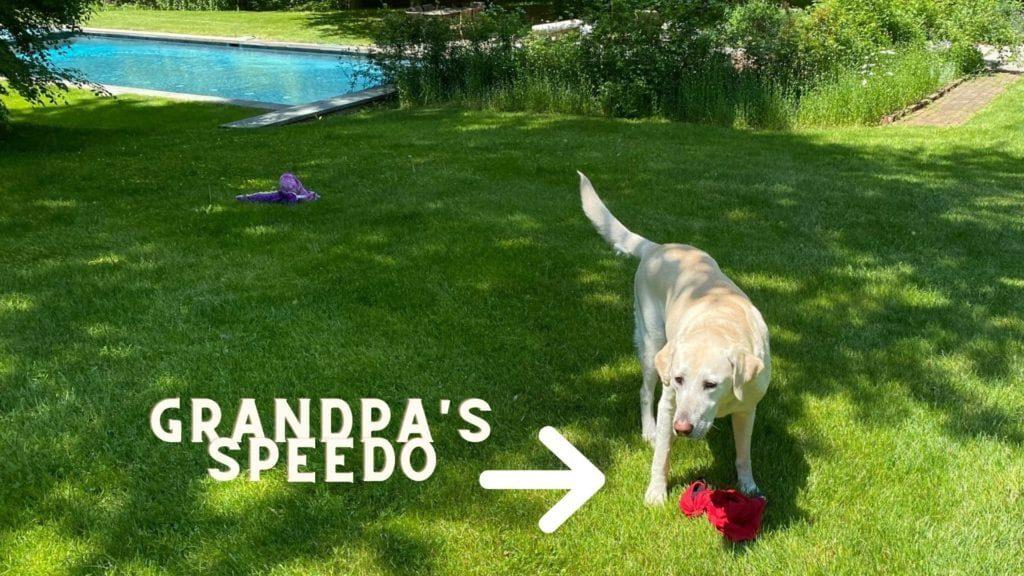 Grandpas speedo